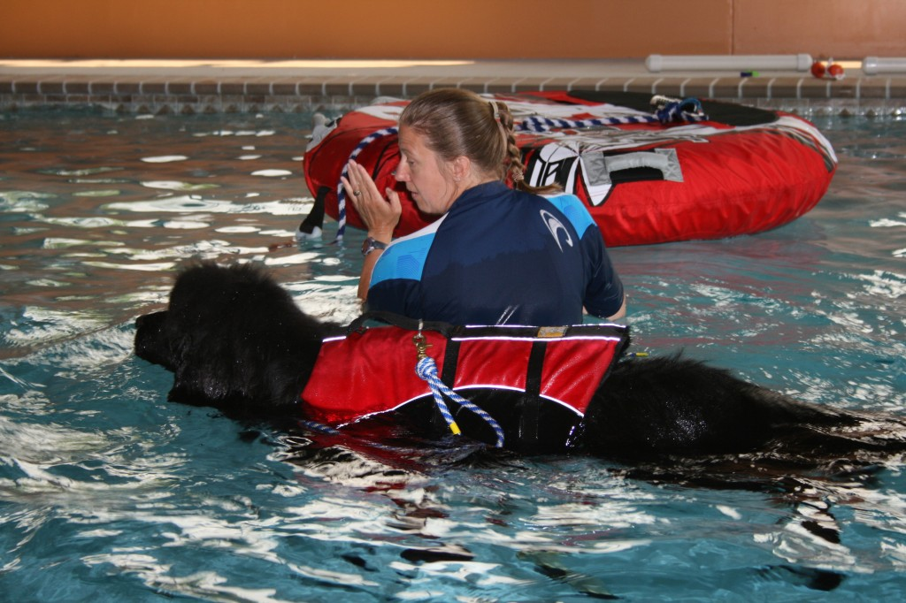 The aquatic center at Green Leaf Pet Resort will offer swimming-based ...