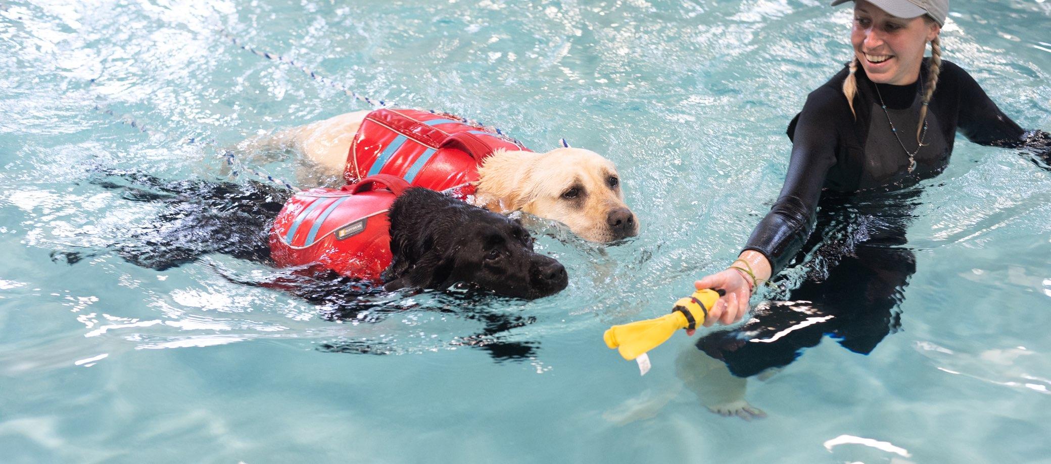 Swimming Green Leaf Pet Resortgreen Leaf Pet Resort